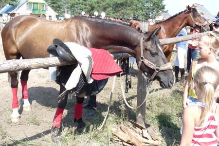 Тазобедренный сустав и занятия конным спортом где в курске купить лекарство сустав